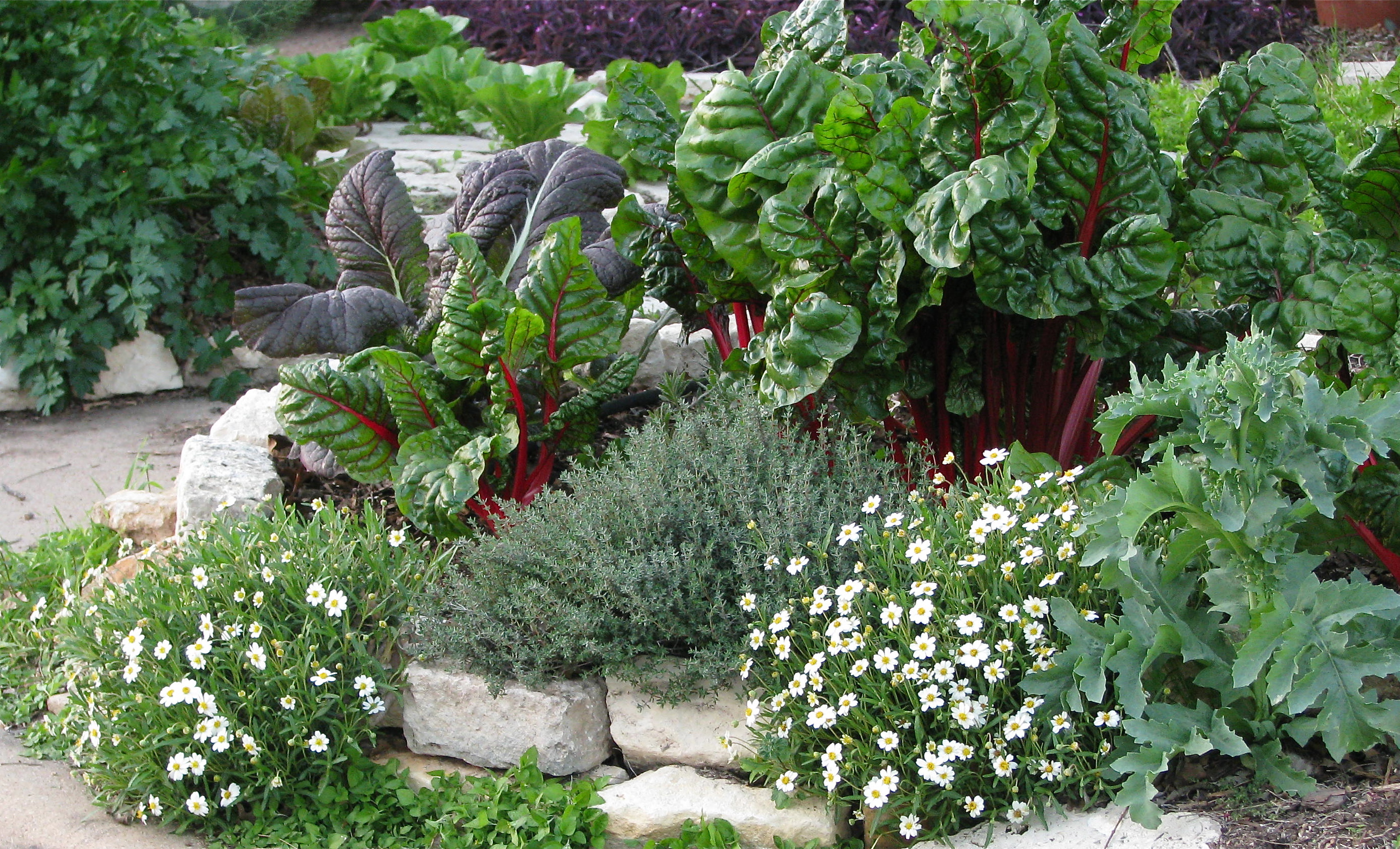 Eat your yard how to design an edible landscape nature for Landscape flowers and plants