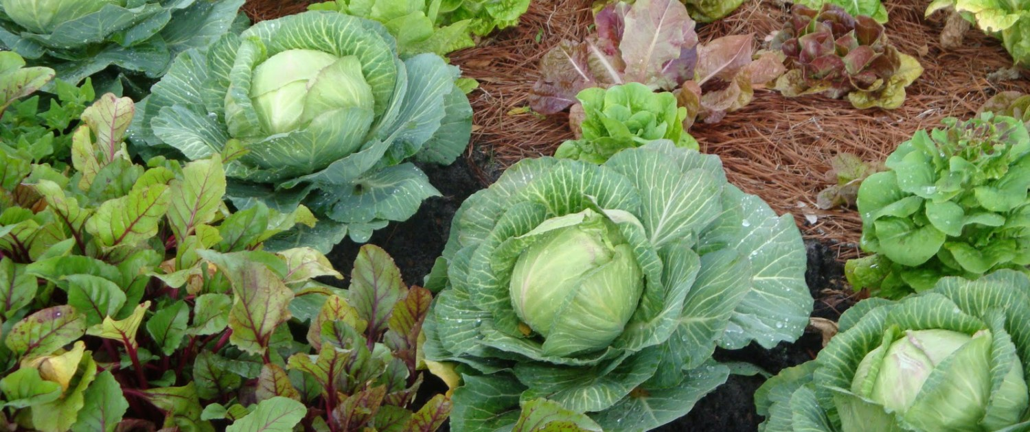 vegetable-garden-wallpaper-3