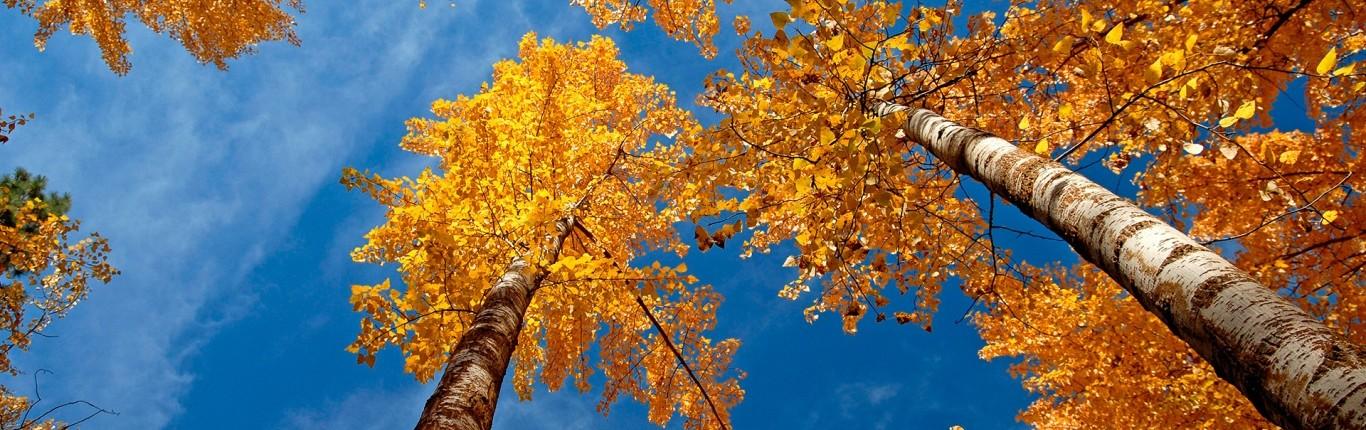 fall_trees-wallpaper-1366x768