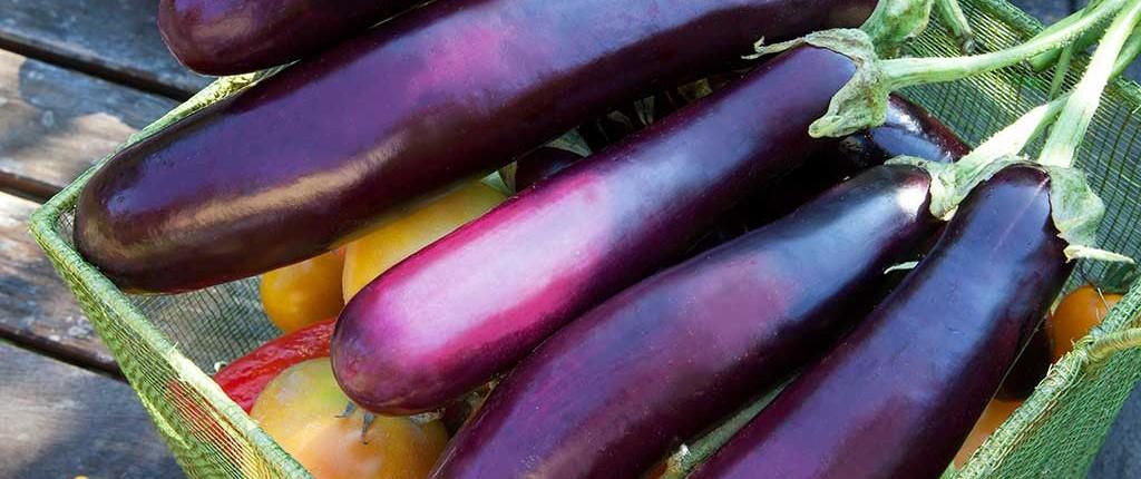 eggplant-harvest-basket